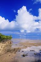 ゲーダ川河口とマングローブ林 西表島 25516049021| 写真素材・ストックフォト・画像・イラスト素材|アマナイメージズ