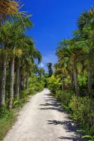 由布島 亜熱帯植物楽園