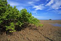 筍根とヤマプシキ 仲間川 西表島 25516049067| 写真素材・ストックフォト・画像・イラスト素材|アマナイメージズ