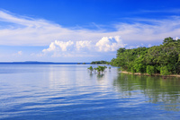 ナダラ川河口とマングローブ林 西表島