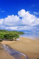 西ゲーダ川河口とマングローブ林 西表島