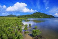 浦内川下流のマングローブ 星立天然保護区域 西表島 25516049154| 写真素材・ストックフォト・画像・イラスト素材|アマナイメージズ