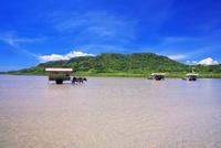 海を渡る水牛車 西表島〜由布島 25516049233| 写真素材・ストックフォト・画像・イラスト素材|アマナイメージズ