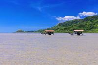 海を渡る水牛車 西表島〜由布島 25516049236| 写真素材・ストックフォト・画像・イラスト素材|アマナイメージズ
