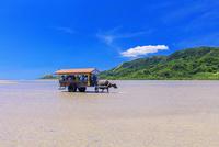 海を渡る水牛車 西表島〜由布島 25516049238| 写真素材・ストックフォト・画像・イラスト素材|アマナイメージズ