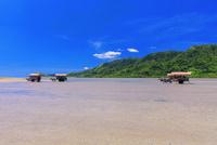 海を渡る水牛車 西表島〜由布島 25516049241| 写真素材・ストックフォト・画像・イラスト素材|アマナイメージズ