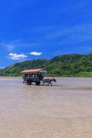 海を渡る水牛車 西表島〜由布島 25516049243| 写真素材・ストックフォト・画像・イラスト素材|アマナイメージズ