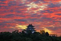 宇和島城夕景