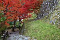 郡上八幡城 石垣と紅葉 25516049557| 写真素材・ストックフォト・画像・イラスト素材|アマナイメージズ