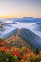 紅葉のおにゅう峠より雲海の山並み朝景 25516049673| 写真素材・ストックフォト・画像・イラスト素材|アマナイメージズ
