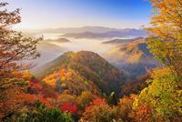 紅葉のおにゅう峠より雲海の山並み朝景 25516049682| 写真素材・ストックフォト・画像・イラスト素材|アマナイメージズ