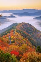 紅葉のおにゅう峠より雲海の山並み朝景 25516049744| 写真素材・ストックフォト・画像・イラスト素材|アマナイメージズ
