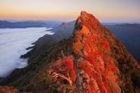紅葉の石鎚山 弥山より夕映え天狗岳 25516049806| 写真素材・ストックフォト・画像・イラスト素材|アマナイメージズ