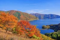 紅葉の月出峠より琵琶湖 奥琵琶湖パークウェイ 25516049870| 写真素材・ストックフォト・画像・イラスト素材|アマナイメージズ