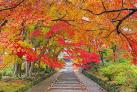紅葉の毘沙門堂 参道と勅使門 25516049877| 写真素材・ストックフォト・画像・イラスト素材|アマナイメージズ