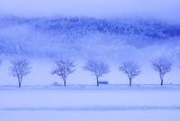 樹氷の木立と朝霧 25516049897| 写真素材・ストックフォト・画像・イラスト素材|アマナイメージズ