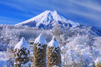 雪の忍野より富士山 25516049905| 写真素材・ストックフォト・画像・イラスト素材|アマナイメージズ