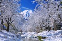 雪の新名庄川より富士山