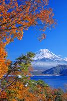 雪と紅葉の本栖湖より富士山 25516050019| 写真素材・ストックフォト・画像・イラスト素材|アマナイメージズ