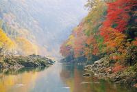 紅葉の保津川