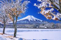 雪の木立と富士山 25516050125| 写真素材・ストックフォト・画像・イラスト素材|アマナイメージズ