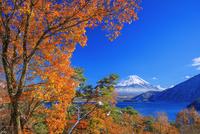 雪と紅葉の本栖湖より富士山