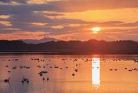 伊豆沼と朝日 伊豆沼・内沼の鳥類およびその生息地