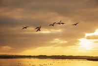 伊豆沼朝景 伊豆沼・内沼の鳥類およびその生息地 25516050143| 写真素材・ストックフォト・画像・イラスト素材|アマナイメージズ