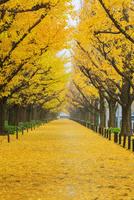 神宮外苑いちょう並木黄葉 25516050144| 写真素材・ストックフォト・画像・イラスト素材|アマナイメージズ