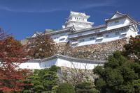 姫路城 25532011096| 写真素材・ストックフォト・画像・イラスト素材|アマナイメージズ