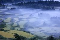 朝霧漂う星峠の棚田
