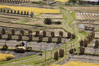 椹平の棚田の農作業