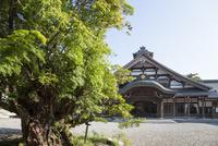清凉寺タブの木と庫裡