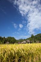 実りの田んぼと茅葺環状集落と秋の雲