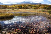 田代平湿原の秋 25532011668| 写真素材・ストックフォト・画像・イラスト素材|アマナイメージズ