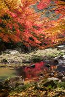 豪渓の紅葉と渓流 25532011683| 写真素材・ストックフォト・画像・イラスト素材|アマナイメージズ