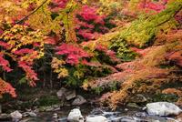 豪渓の紅葉と渓流