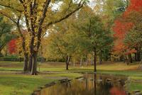 秋の北大構内を流れるサクシュコトニ川