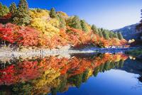 紅葉の香嵐渓 25538010923| 写真素材・ストックフォト・画像・イラスト素材|アマナイメージズ