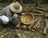 ナメコ栽培 25562003394| 写真素材・ストックフォト・画像・イラスト素材|アマナイメージズ