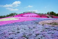 芝桜の丘 (萩太郎山)  茶臼山高原