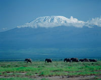 キリマンジャロ山と象 アンボセリ国立公園