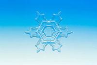 雪の結晶 広幅6花
