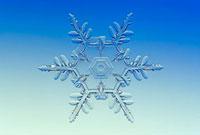 雪の結晶 樹枝状6花