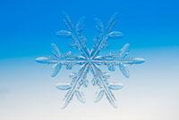 雪の結晶 樹枝状6花 25588007892| 写真素材・ストックフォト・画像・イラスト素材|アマナイメージズ