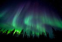 北の夜空にカシオペアと小熊座が輝き タイガの森に現れたオーロラ