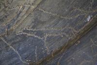 イヌ科を描いた線刻画 25617009647| 写真素材・ストックフォト・画像・イラスト素材|アマナイメージズ