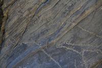 大きいウシ科の頭部とイヌ科を描いた線刻画 25617009648| 写真素材・ストックフォト・画像・イラスト素材|アマナイメージズ