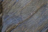 ウシ科イヌ科馬を描いた線刻画 25617009649| 写真素材・ストックフォト・画像・イラスト素材|アマナイメージズ