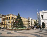 セナド広場のクリスマスツリー